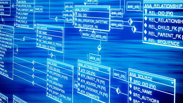 Software del Casino en Línea